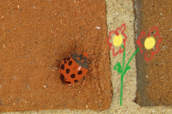 Stink bug to lady bug